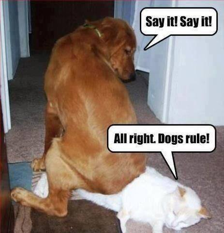 Dog rules! ;). .. he doesn't look like the cat is actually giving a