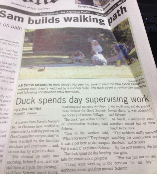 "Duck Boss. . Duck spends day supervising war l a, ml "" f' 1 . sad member arsed bitt at taur imasinner"