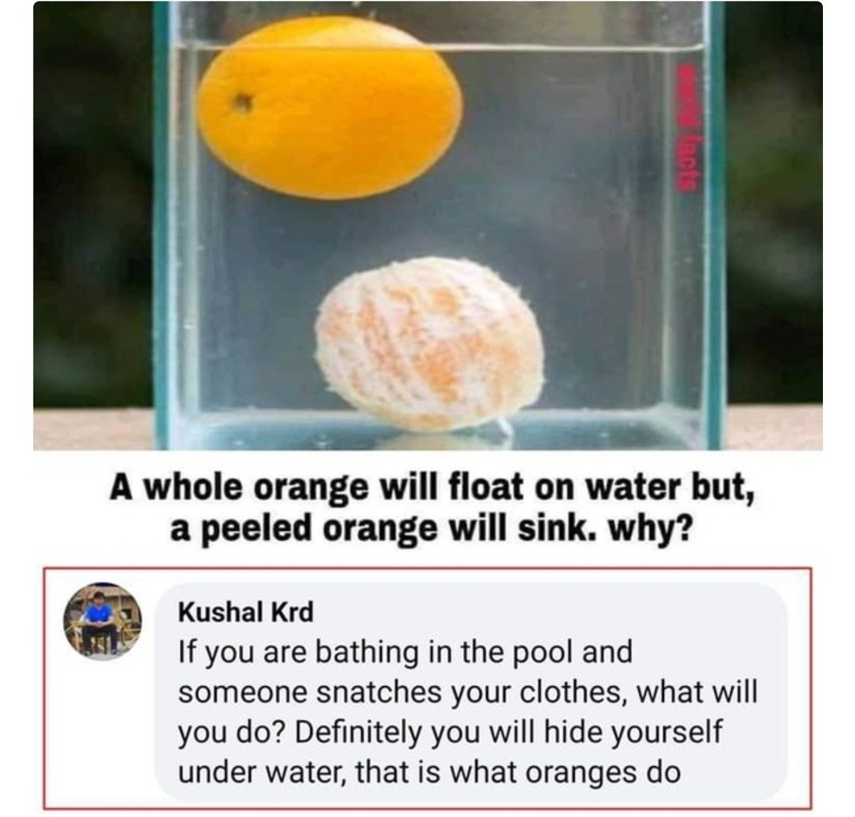Embarrassed Orange. .. Hey I know this one. It has to do with the waxy peel being a water barrier.