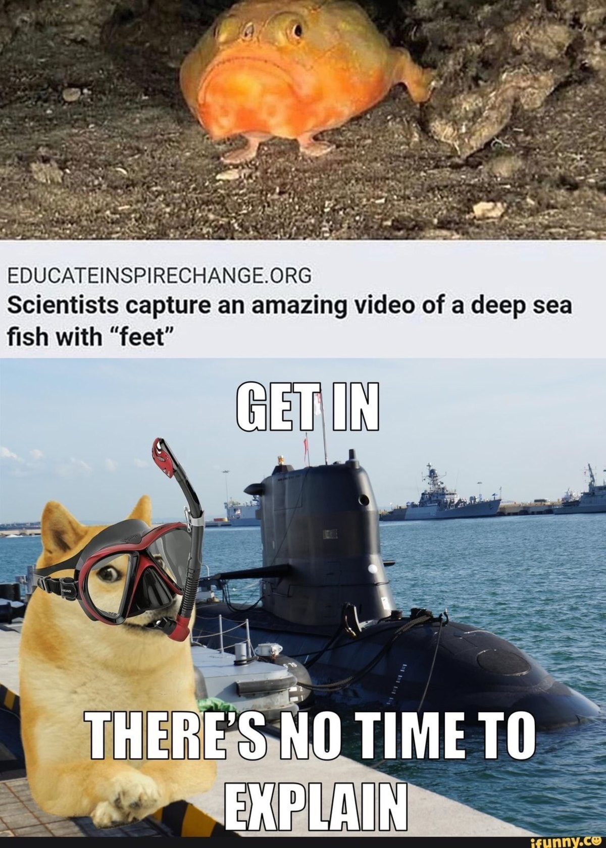 endurable ragged well-informed Herring. .. When did doge start being into feet..?