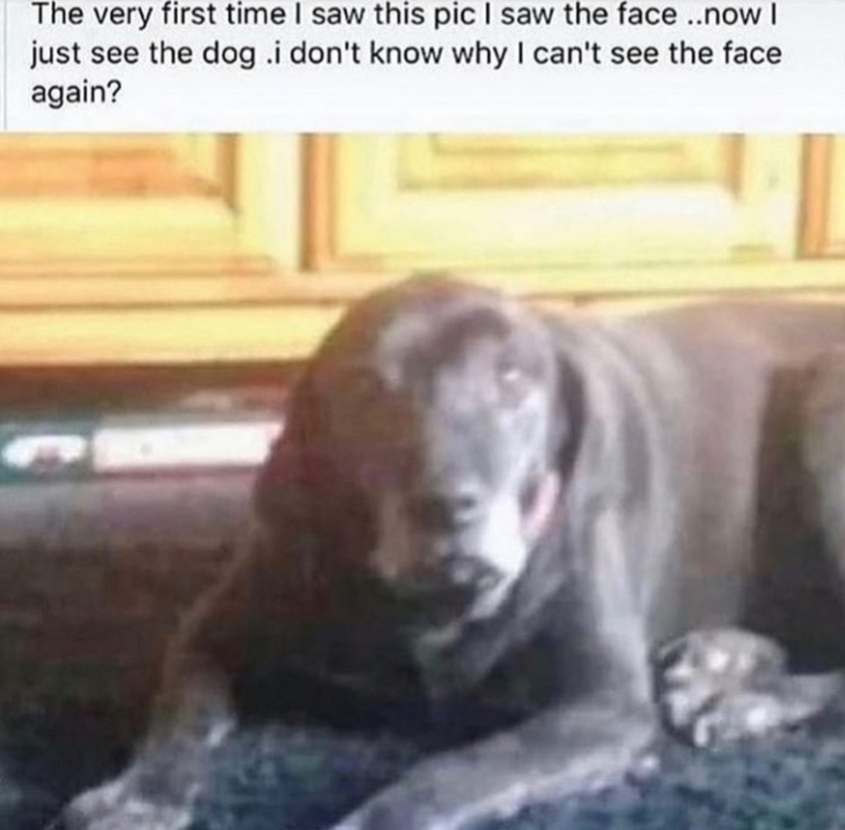 Esoteric surgery. Same thing happened to me and I cannot force myself to see the face again, no matter what... What face? There is only dog Comment edited at .