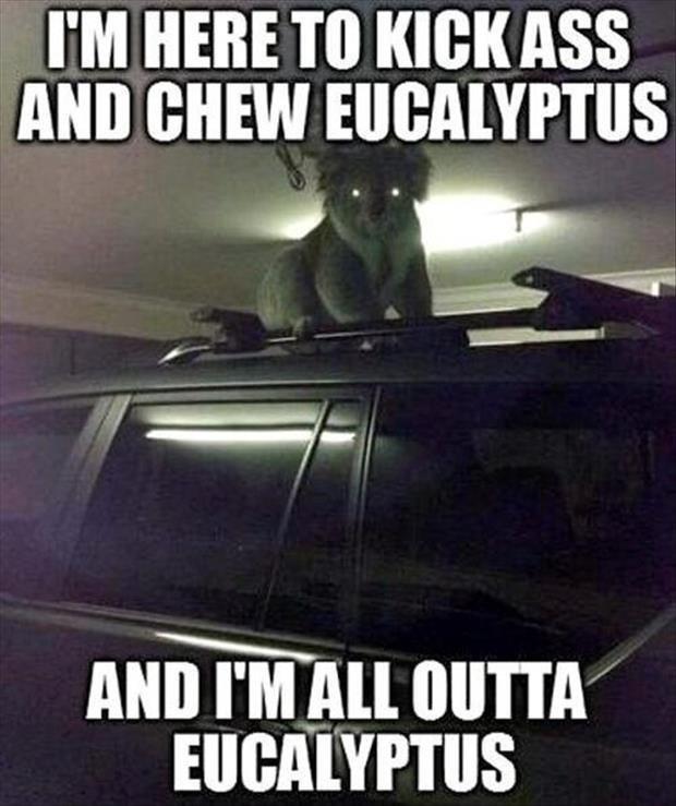 Eucalyptus y you do this to me. . I' M HERETO. ASSUMING DIRECT CONTROL