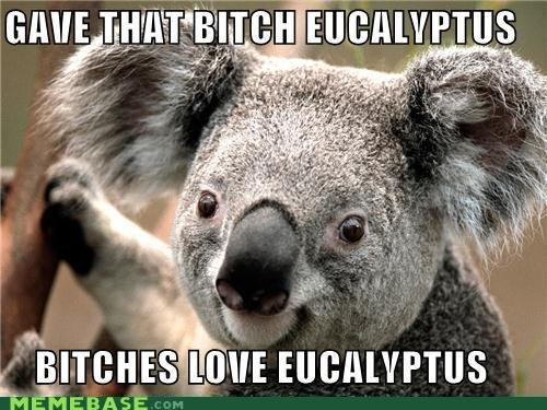 """Eucalyptus es love it. <a href=""""pictures/1306884/My+1st+OC/"""" target=blank>funnyjunk.com/funnypictures/1306884/My+1st+OC/</a><br /> &"""