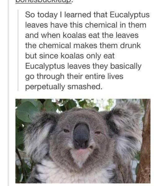 Eucalyptus. .. nice