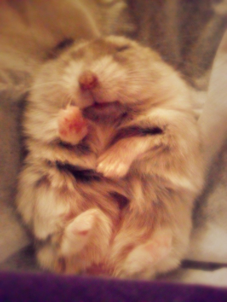 eureka,. this is my hamster, eureka,[: i just wanted to share this with you cause she's adorable. that is all. it's your thumb, and i've already got two. do wha