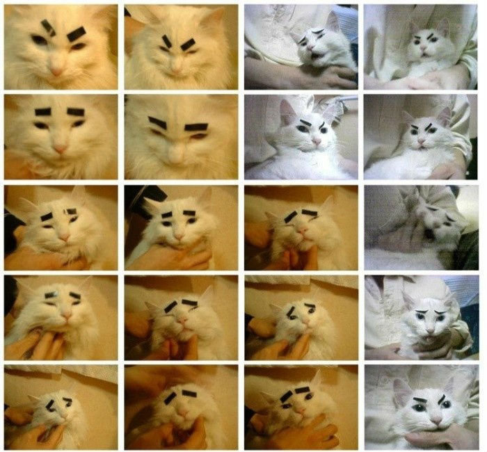 eyebrow cat. .. The third one made me think of this.