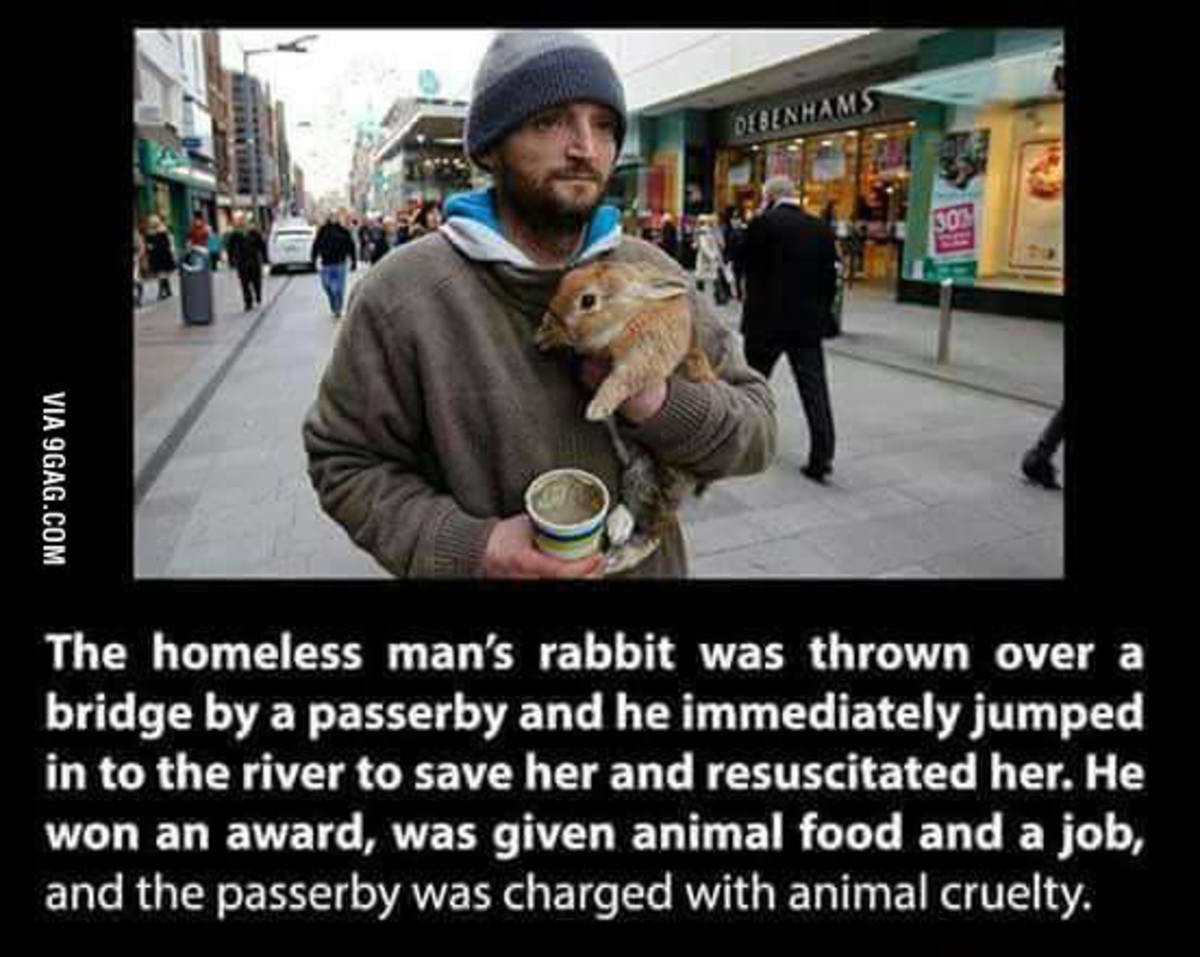 Faith in Humanity 2. . VIII The homeless man' s rabbit was thrown over a bridge by a passerby and he immediately jumped in to the river to save her and resuscit