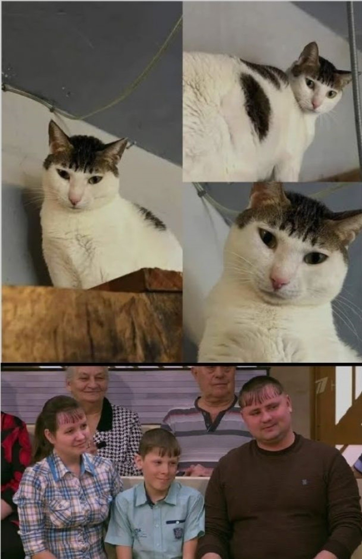 Family Pet. .. I would call this cat Boris