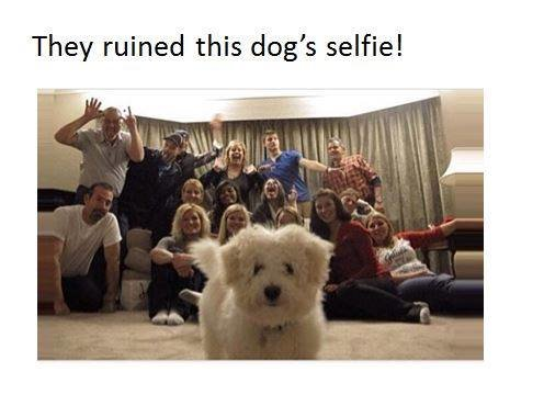 family photobomb. . They ruined this dog' s same!