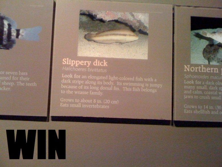 Fish Win. . Northern fora dark my lilili dank . jaws to . Grams to H an m