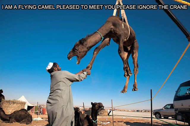 Flying Camel. . mth, IAM A FLYING CAMEL PLEASED TO MEET YOU E' -ERASE IGNORE THE CRANE