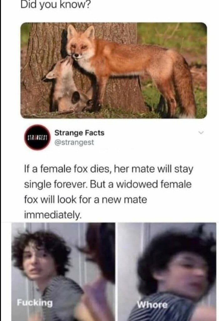 Fox. .. This was disproven, male foxes wonder outside their territories for fox pussy often when not raising kits, they certainly don't go celibate on their mates death