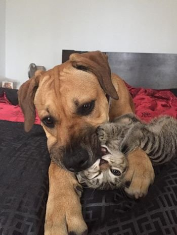 Friendly chew toy!! :. .. Son, stop eating that cat.