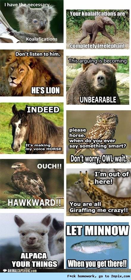 Funnay animals. I use these on a daily basis.