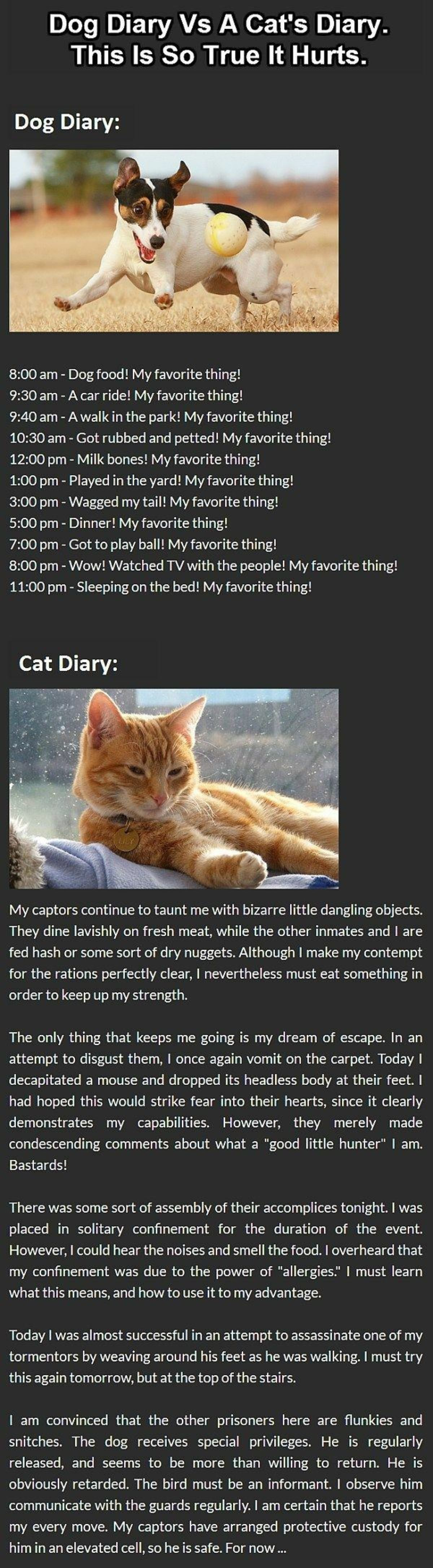 "Funny: Cat Vs Dog Diary. join list: CuteKitty (401 subs)Mention Clicks: 14247Msgs Sent: 121216Mention History join list:. ""He is obviously retarded"""