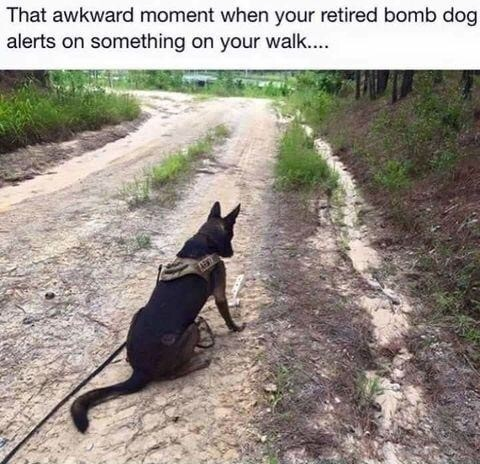 Good boy. join list: QtStuff (728 subs)Mention History.. Bomb dog's face when you're the bomb