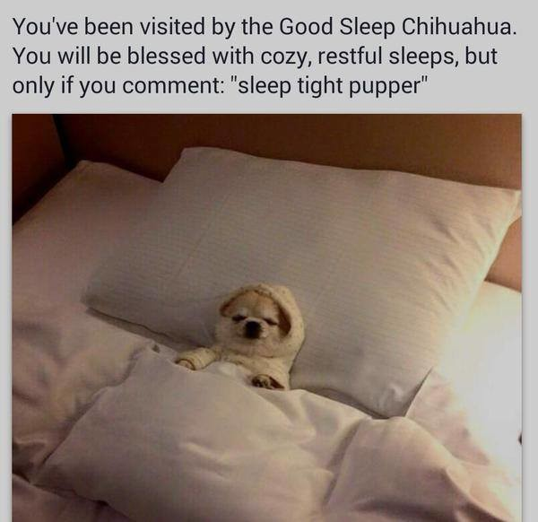 """goodht, fj. . You' been visited by the Good Sleep Chihuahua. You will be blessed with new restful sleeps, but only if you comment: """"sleep tight puppy"""". Sleep tight pupper don't judge me! I have a 7 week old!"""