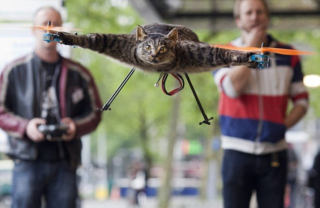 Guy must have really loved his cat....... THIS GUY STUFFED HIS CAT AND TURNED IT INTO A QUADCOPTER... We have the technology. We can rebuild him. We can make him better.