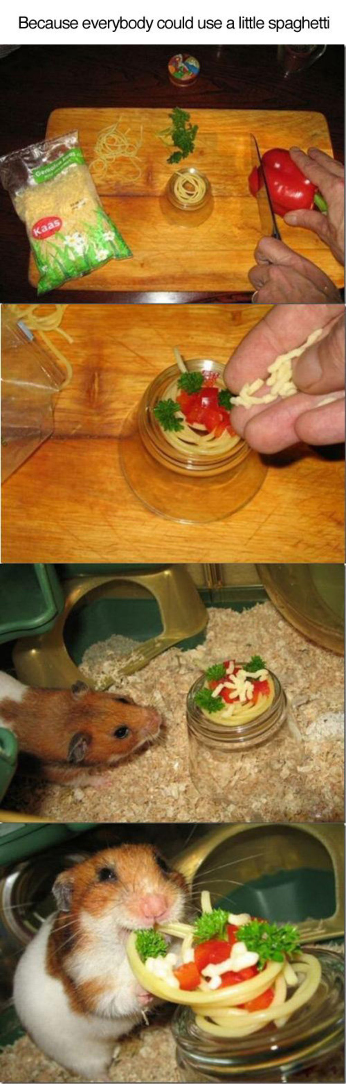 Hamster Restaurant. join list: CuteThings (242 subs)Mention History join list:. Probably isn't good for him, but so are a good amount of the things I eat. Everyone deserves a treat every now and then.
