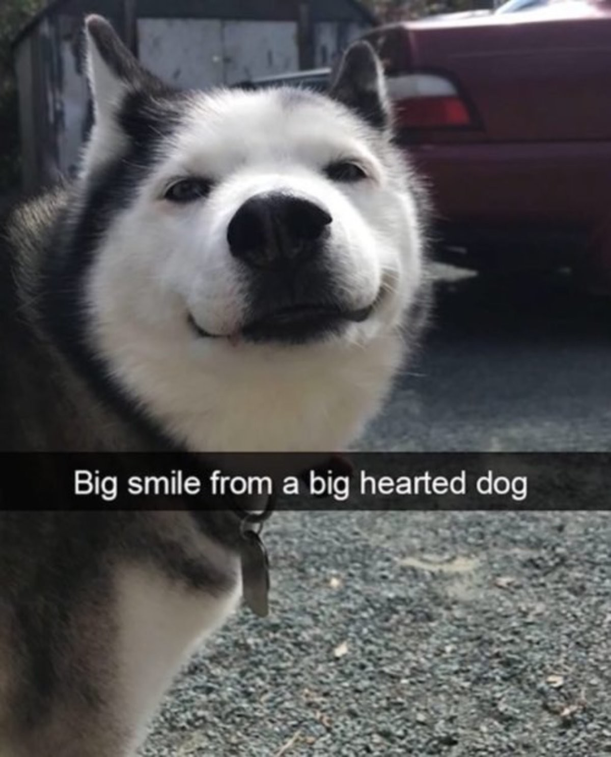 Happy thoughts :). Big heart. join list: HappyThoughts (1573 subs)Mention History. Big smile from a big hearted dogYou' re my favorite part: of staying alive.Yo