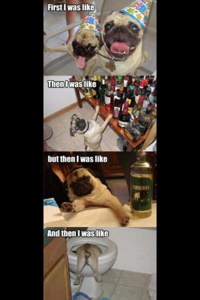 Hard ht. pugs<3.. And then I was like, skipping this post