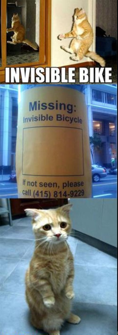 Have you not seen his bike?. A cat has lost his invisible bike, and has left notes everywhere in hopes of finding it..
