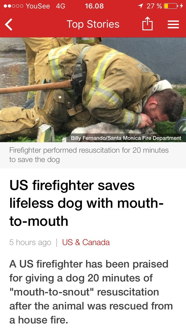 """He's a good boy!. . 1"""" LEG 16. 08 Top Stories Billy 'at: ' Monica Fired Firefighter performed resuscitation for 20 minutes to save the dog US firefighter saves"""