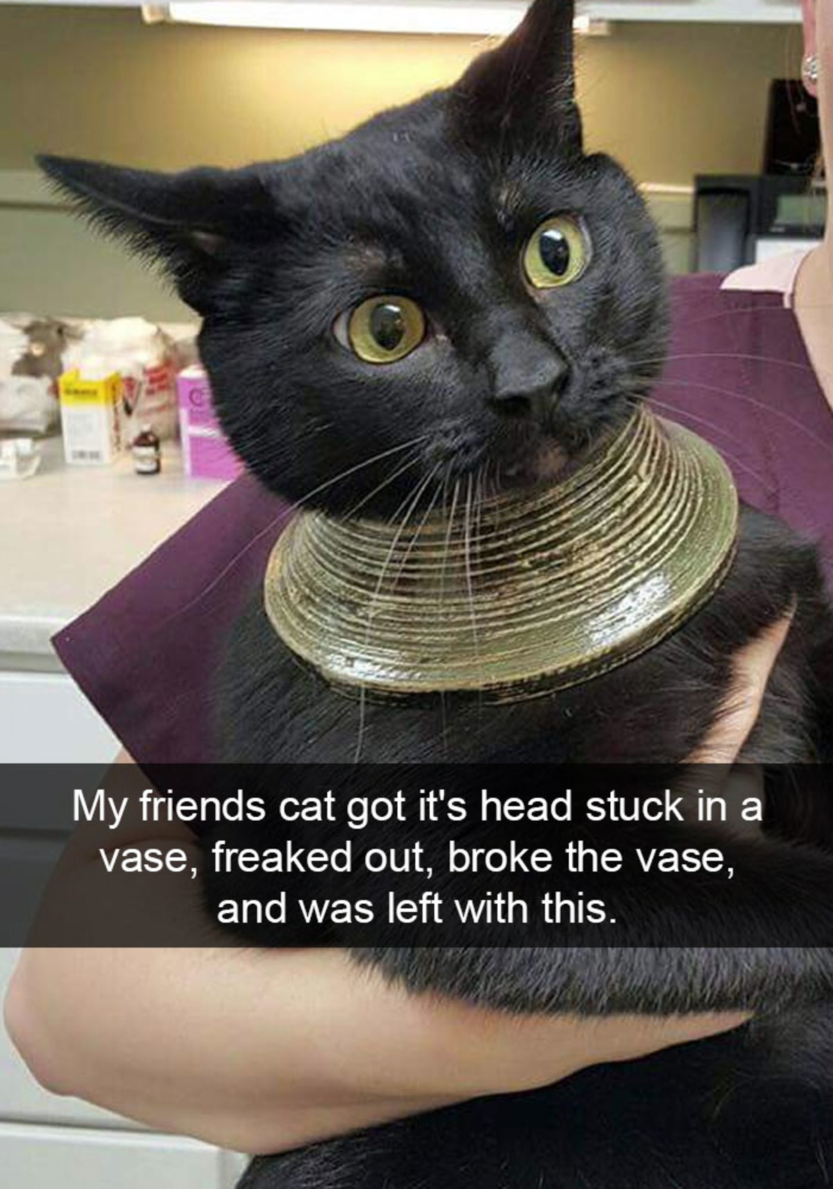 Hilarious Cat Snapchats. join list: CuteKitty (401 subs)Mention History. My friends cat got it' s head stuck in a vase, freaked out, broke the vase, and was lef