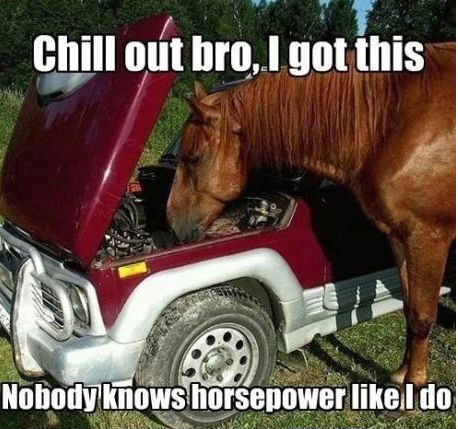 Horse knows cars!. thats 1 BADA$$ HORSE. will out um animus. So what is it, mustang? Ferrari? Colt?