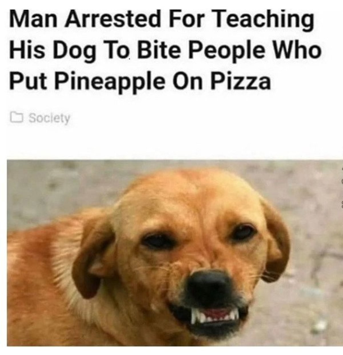 How To Train Your Dog. join list: CuteDogs (234 subs)Mention History. Put Cirri' l, Pizza. Christ, dude, if you don't like it, you don't have to eat any. What authority do you have to say what should or shouldn't be on someone else's pizza?