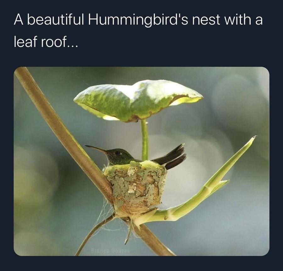 """Hummingbird House. .. haha baby humming bird go """"beep cheep"""""""