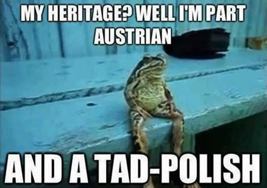 I amphurious about this. . MY HERITAGE? WELL I' M PART AUSTRIAN. That toad sure looks unhoppy he shouldn't be though.. He eats whatever bugs him... pleasedontkillme