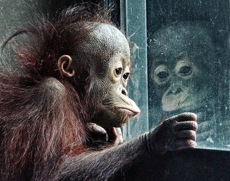 i want in here. please save orang utan.