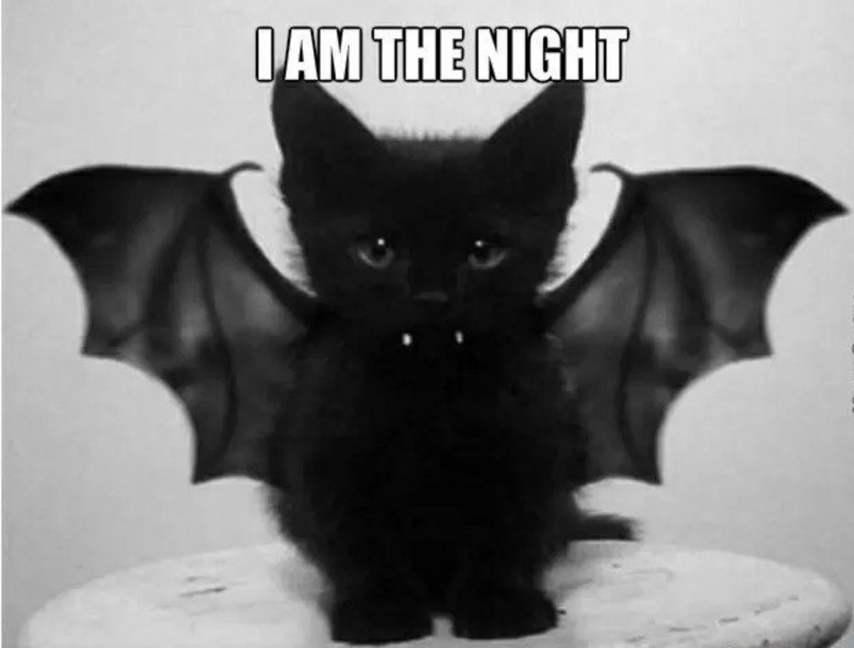 I Was Born In The Darkness. join list: CuteKitty (401 subs)Mention History. HIM FEE NIGHT. Can i keep it?