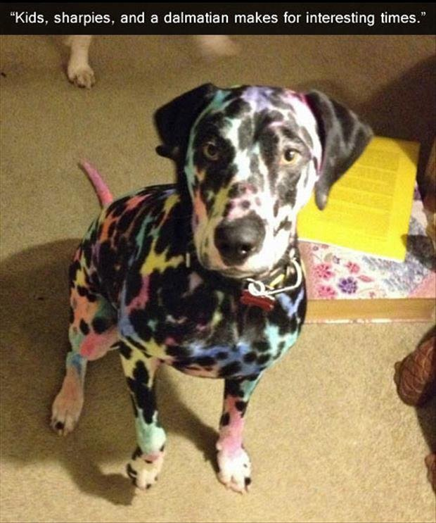 "Kids. source: imgur. Kids. sharpies, and a dalmatian makes for interesting times."". Yes it can. If enough of the white parts are covered up the dog will not be able to absorb enough sunlight to produce chlorophyll and could die from carbon diox"
