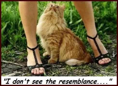 Kitty doesn't see it. . if don efil Ff? 'lillard' 4 Hessian '---. FUNNY!!!