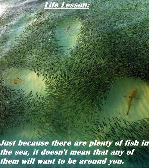 Life Lesson. bawwww. Just were are plenty of fish in the sea, it doesn' t mean that any of them will want an be around you.. There's somebody out there for everyone