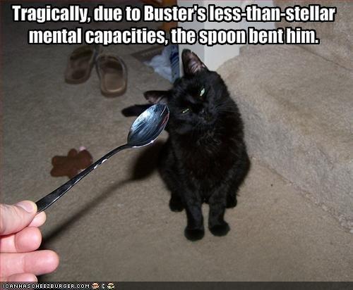 Lol poor kittie. First post :p thumbs please?. mental banalities. ': hent him.