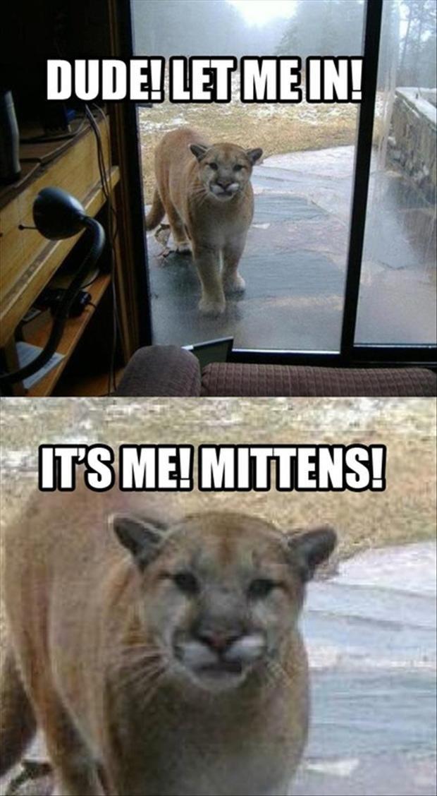 Mittens. Source: dumpaday.. Something's