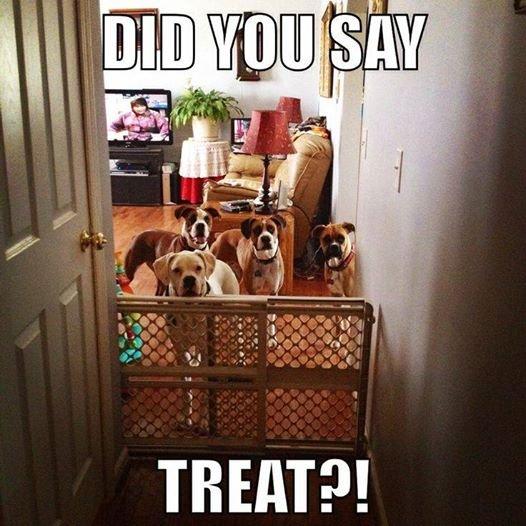 Mom! Treat!!!!!!. . TREAT?!