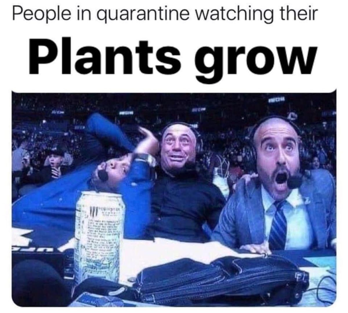 My mother gave me a strawberry plant. join list: HappyThoughts (1573 subs)Mention History.. yo dudes. i started playing classic wow again, anyone playing on Grobbulus? (US) or Zandalar Tribe (EU) ? ALSO incase you missed it: if you check the post befor