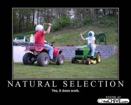 Natural Selection. Thank you Darwin.