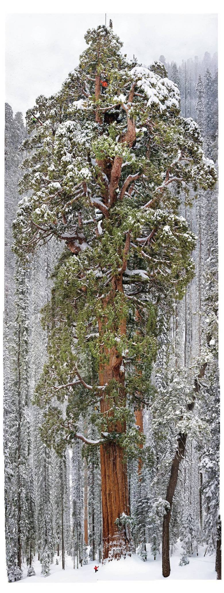 Nature can humble a man. 126 images combined to show the massiveness of a 3,200 year old tree in the Sequoia National Park. Still not as massive as my doe. Hell