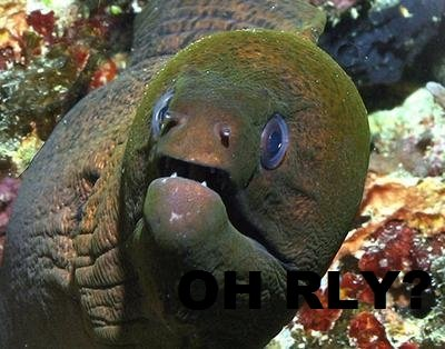 O RLY EEL. O RLY? Yeah, but this time's a eel. Emjoy..