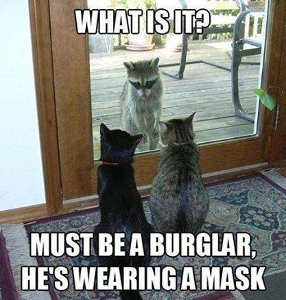 OMG! the bargler!. .