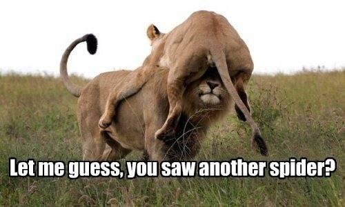 OMG!. . let ma , VIII] SEW Snider?. Stop lion on me