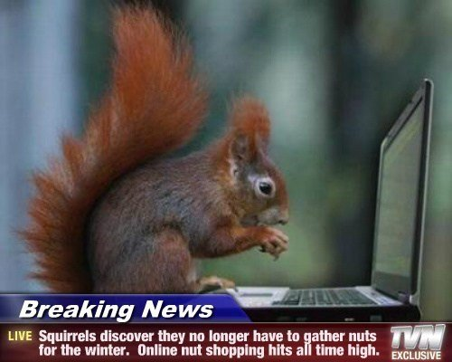 Online shopping is pretty nuts. HOHOHOHOHO PUNS. LIVE Squirrels disinter they no Inner have to ether nuts tar the winter. I] nut shunning hits a time high. :