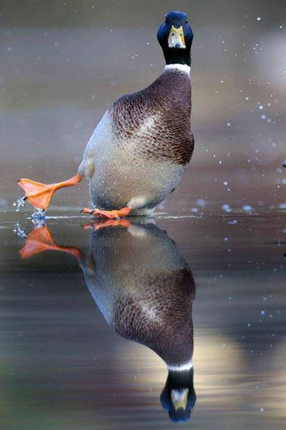 """opss!!. .. """"Do I smell BREAD CRUMBS!"""""""