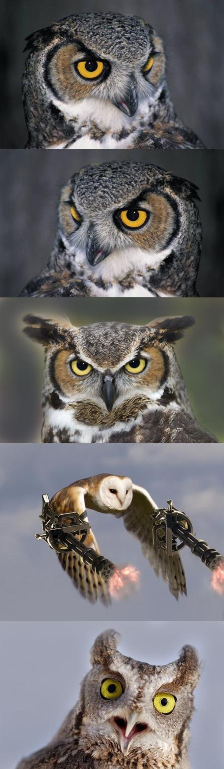 Owl Suprise. lolz from chain gunz.. just made this :)