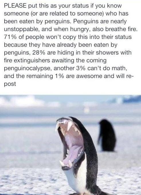 PENGUINOCALYPSE. We're DOOMED!. PLEASE put this as your status if you know someone (or are related to someone) who has been eaten by penguins. Penguins are near
